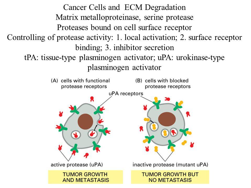 Cancer Cells and ECM Degradation