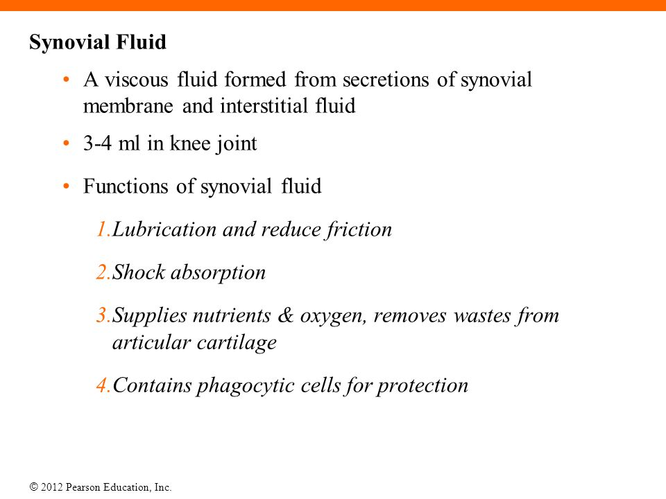 Synovial Fluid A viscous fluid formed from secretions of synovial membrane and interstitial fluid. 3-4 ml in knee joint.
