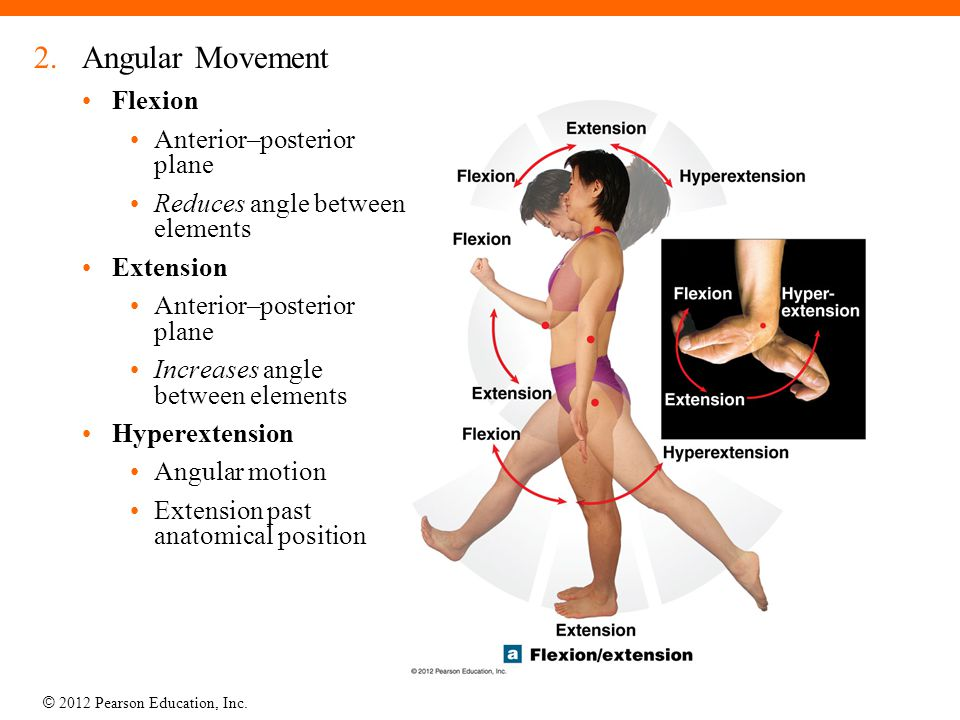 Angular Movement Flexion Anterior–posterior plane