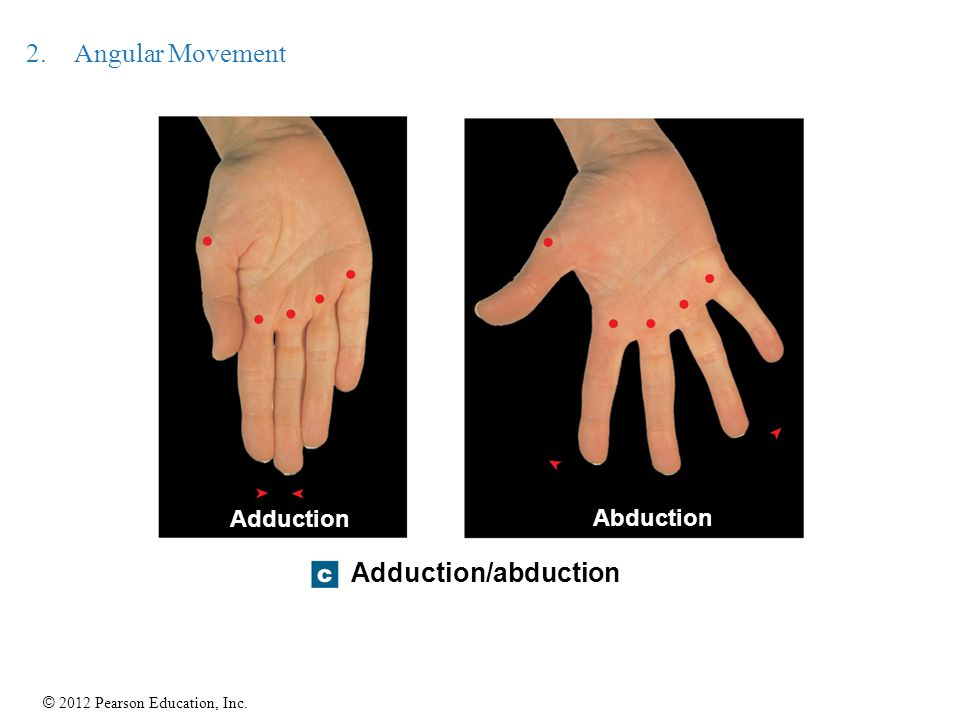 Angular Movement Adduction Abduction Adduction/abduction 21