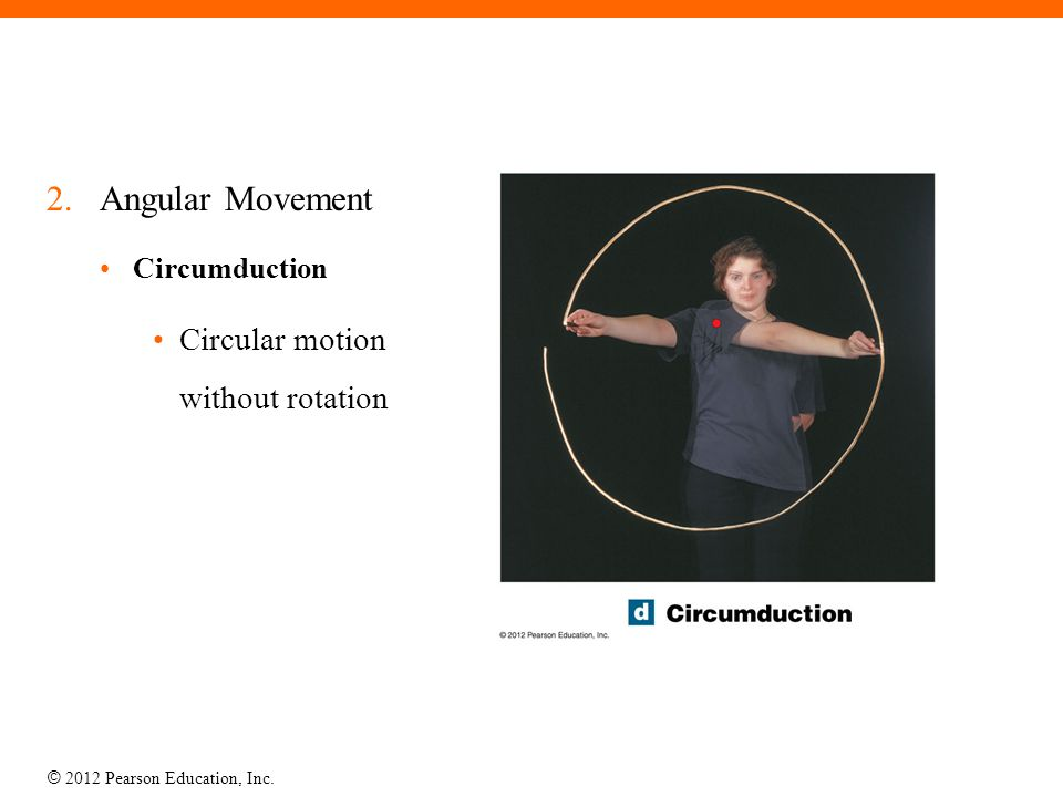 Angular Movement Circumduction Circular motion without rotation