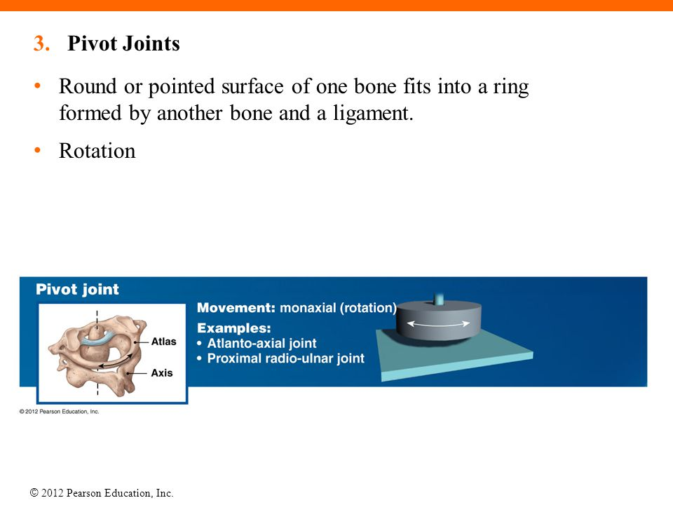Pivot Joints Round or pointed surface of one bone fits into a ring formed by another bone and a ligament.