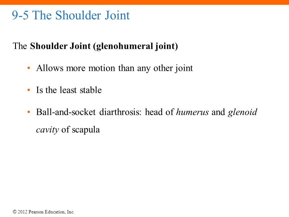 9-5 The Shoulder Joint The Shoulder Joint (glenohumeral joint)