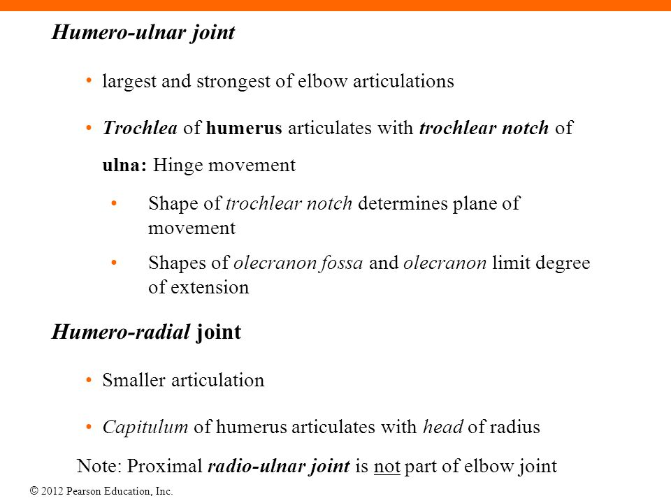 Humero-ulnar joint Humero-radial joint