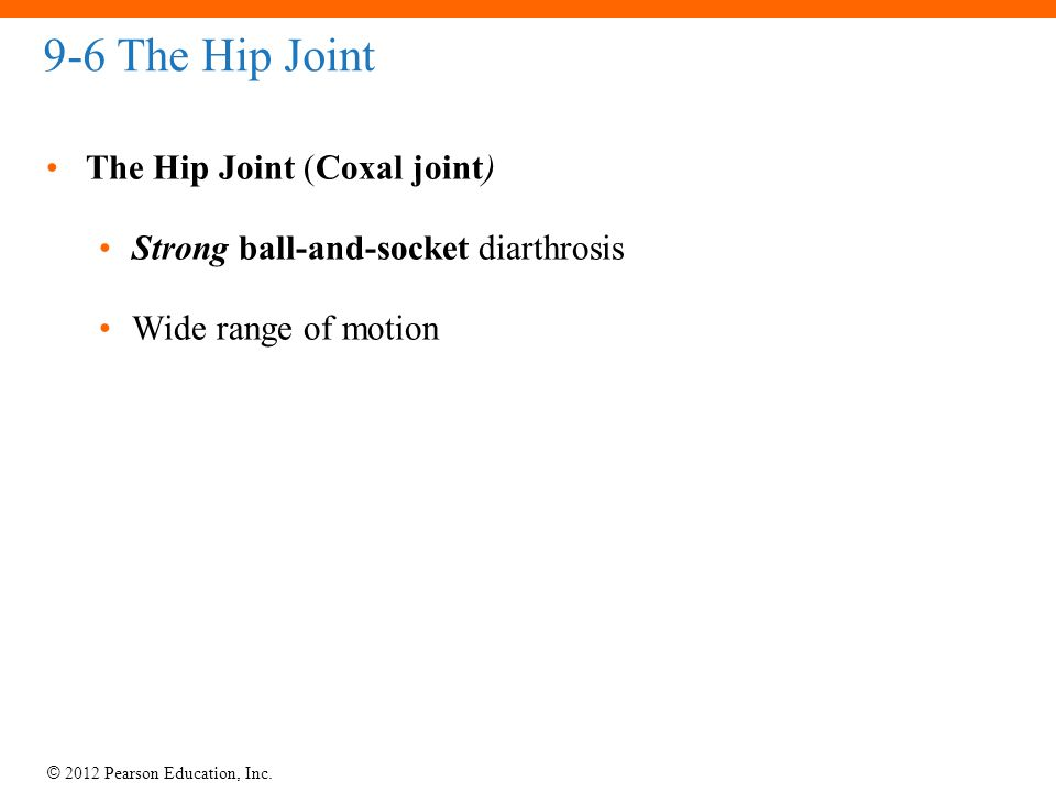 9-6 The Hip Joint The Hip Joint (Coxal joint)