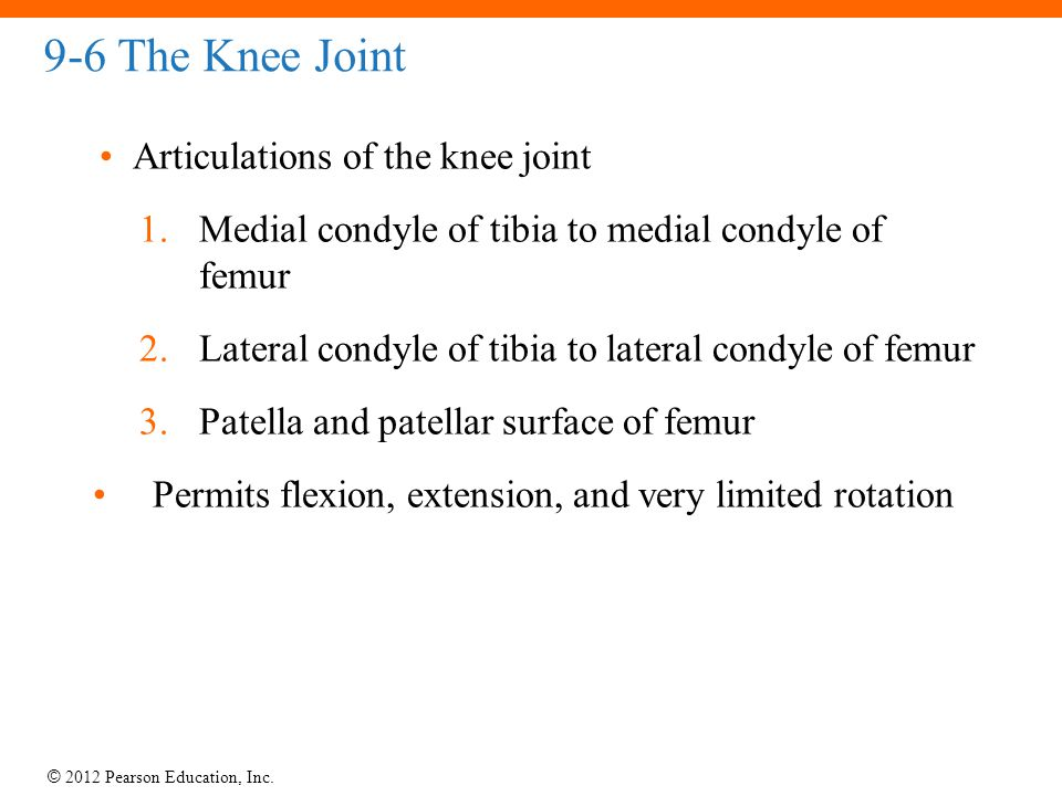 9-6 The Knee Joint Articulations of the knee joint