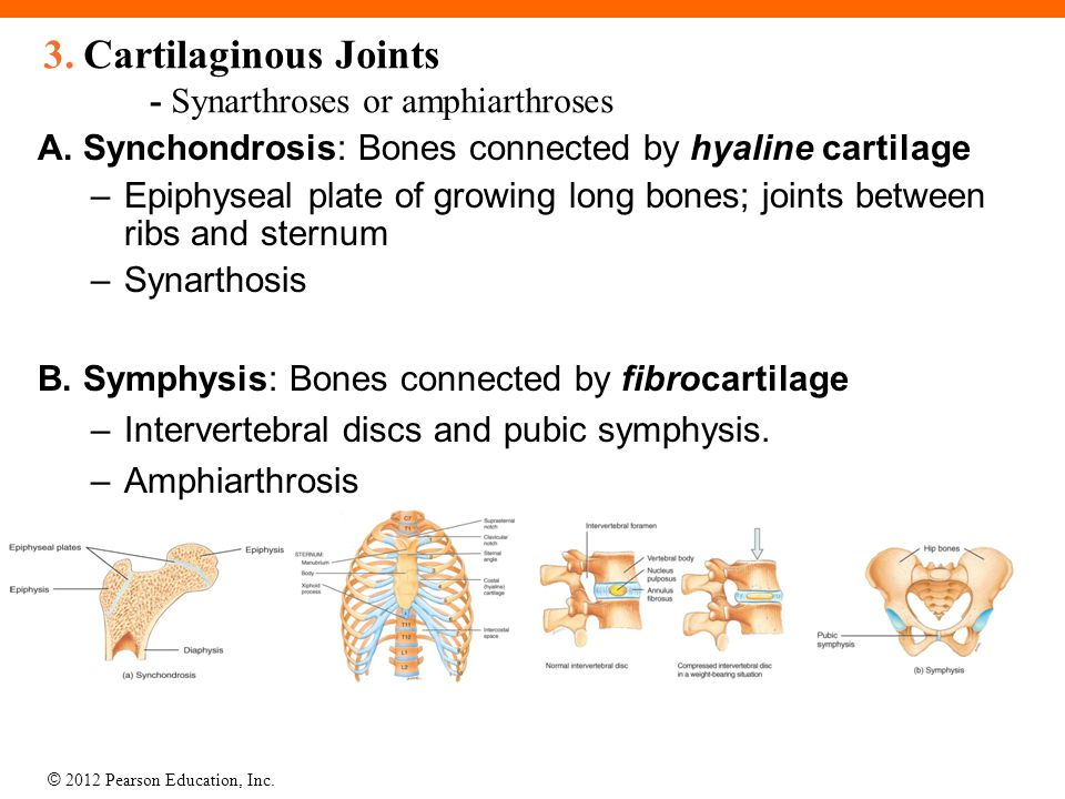cartilaginous joints exhibit amphiarthroses why is this important Chapter 8 joints and movement cartilaginous joints: definition have no joint cavity, and exhibit little no movement: term fontanel.