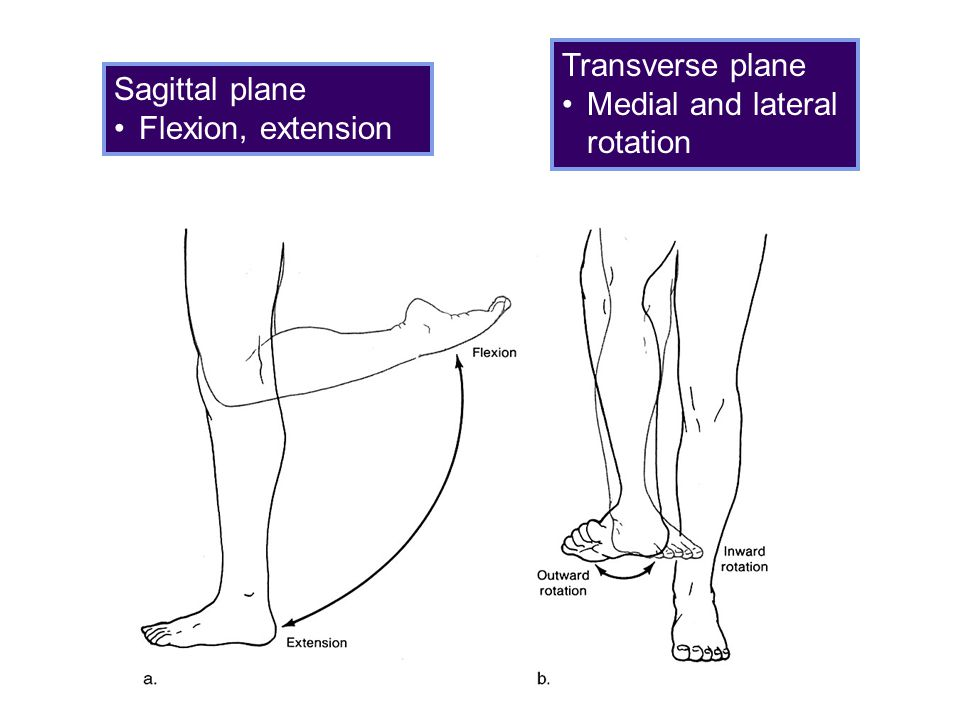 Transverse plane Medial and lateral rotation Sagittal plane Flexion, extension