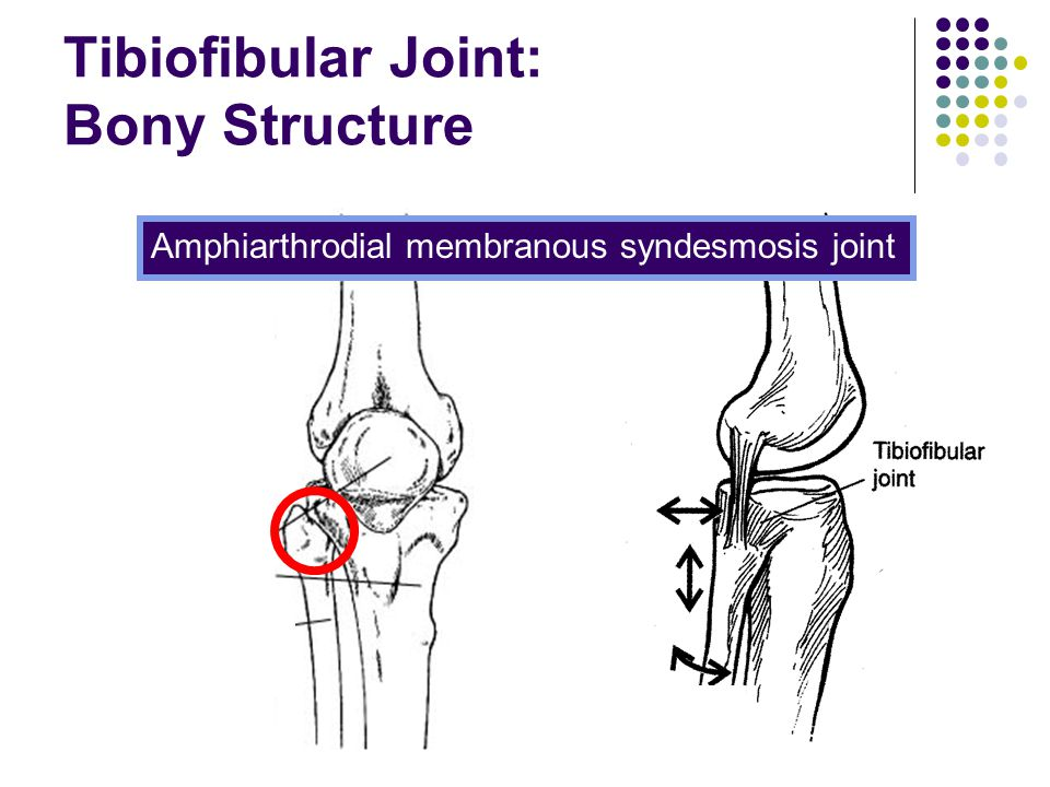 Tibiofibular Joint: Bony Structure