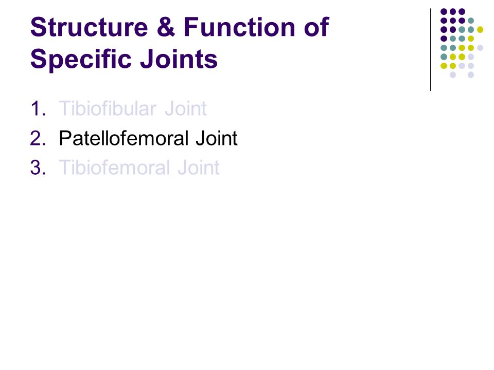 Structure & Function of Specific Joints
