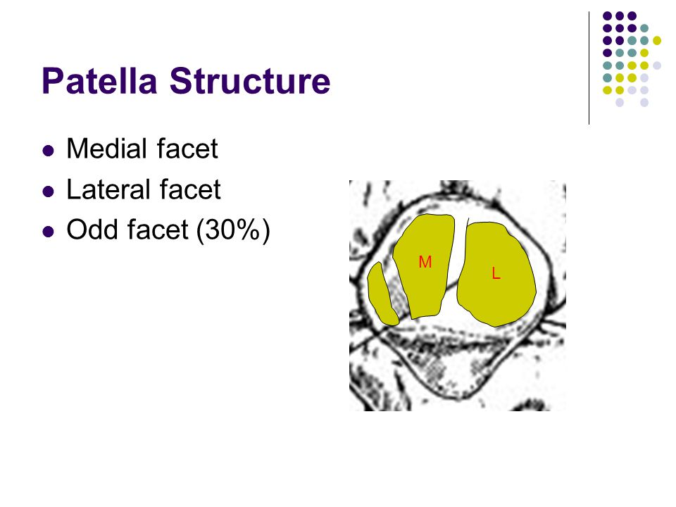 Patella Structure Medial facet Lateral facet Odd facet (30%) M L