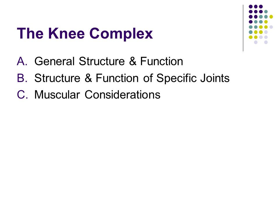 The Knee Complex General Structure & Function