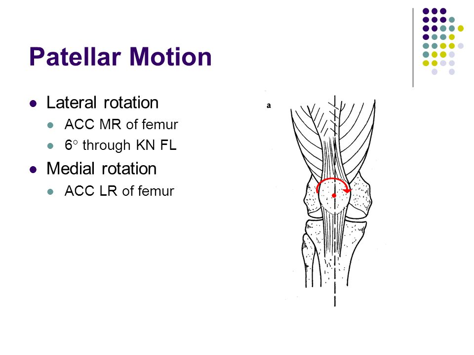 Patellar Motion Lateral rotation Medial rotation ACC MR of femur