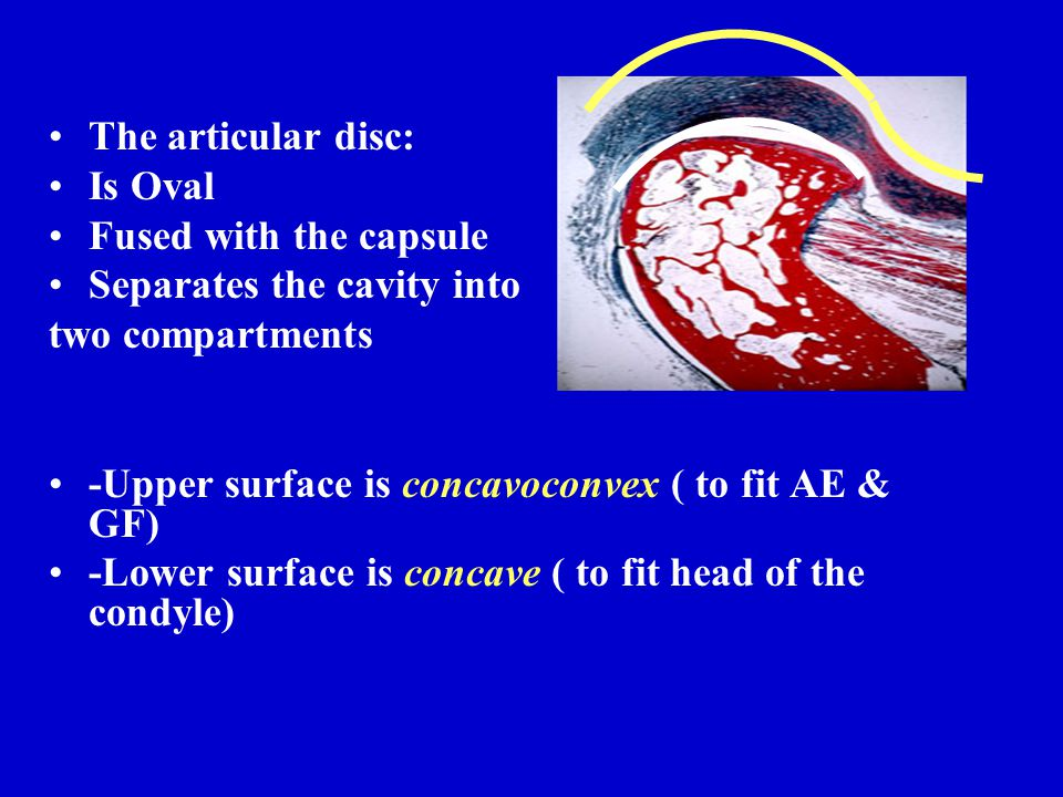The articular disc: Is Oval. Fused with the capsule. Separates the cavity into. two compartments.
