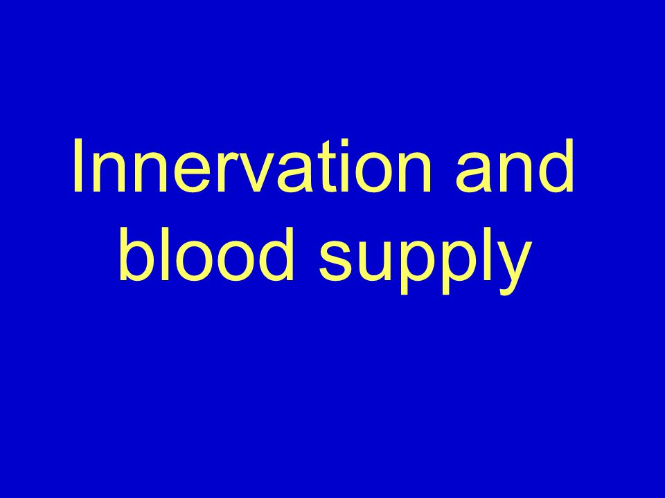 Innervation and blood supply