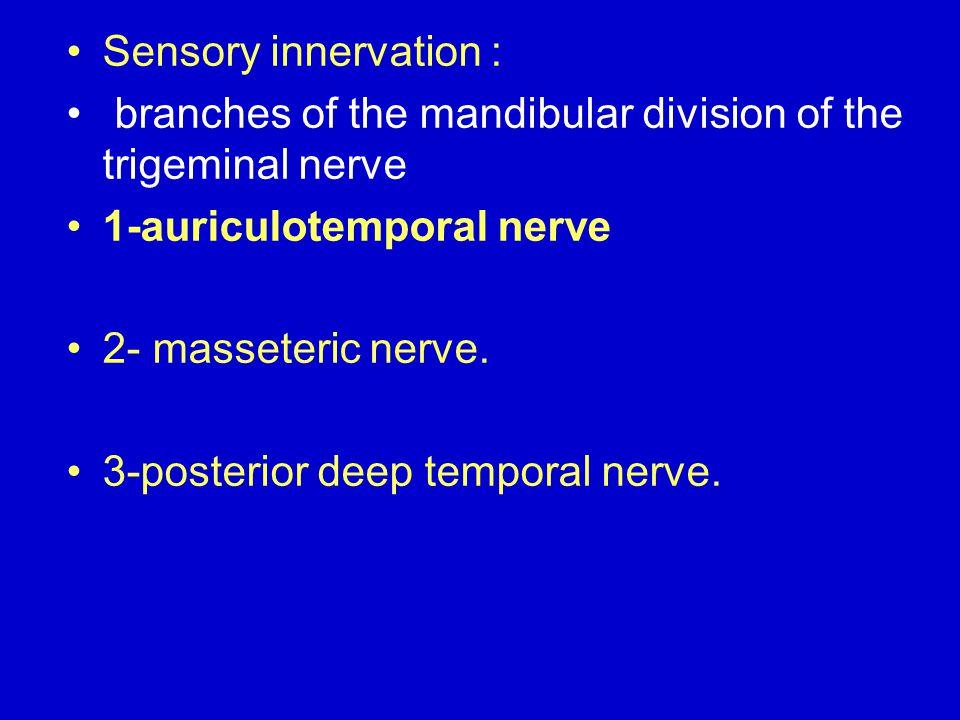 Sensory innervation : branches of the mandibular division of the trigeminal nerve. 1-auriculotemporal nerve.