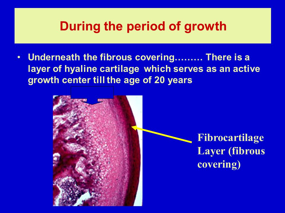 During the period of growth