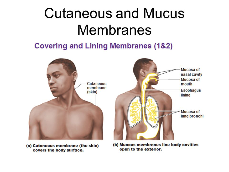 Cutaneous and Mucus Membranes