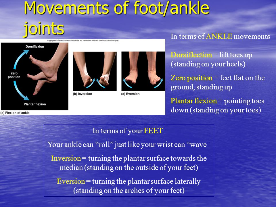 Movements of foot/ankle joints