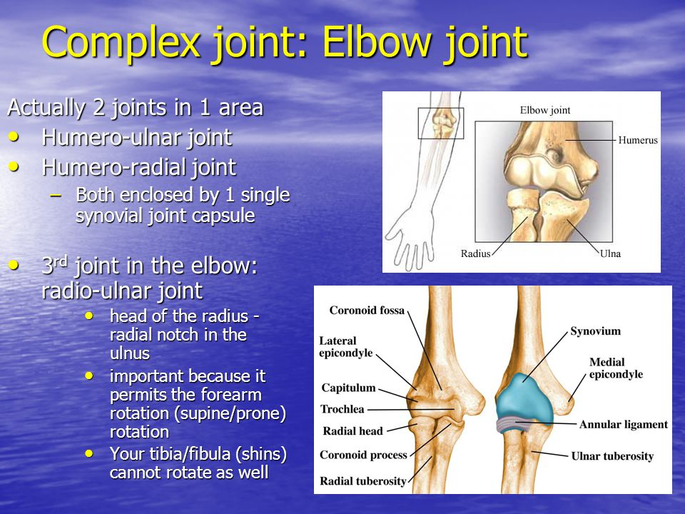 Complex joint: Elbow joint