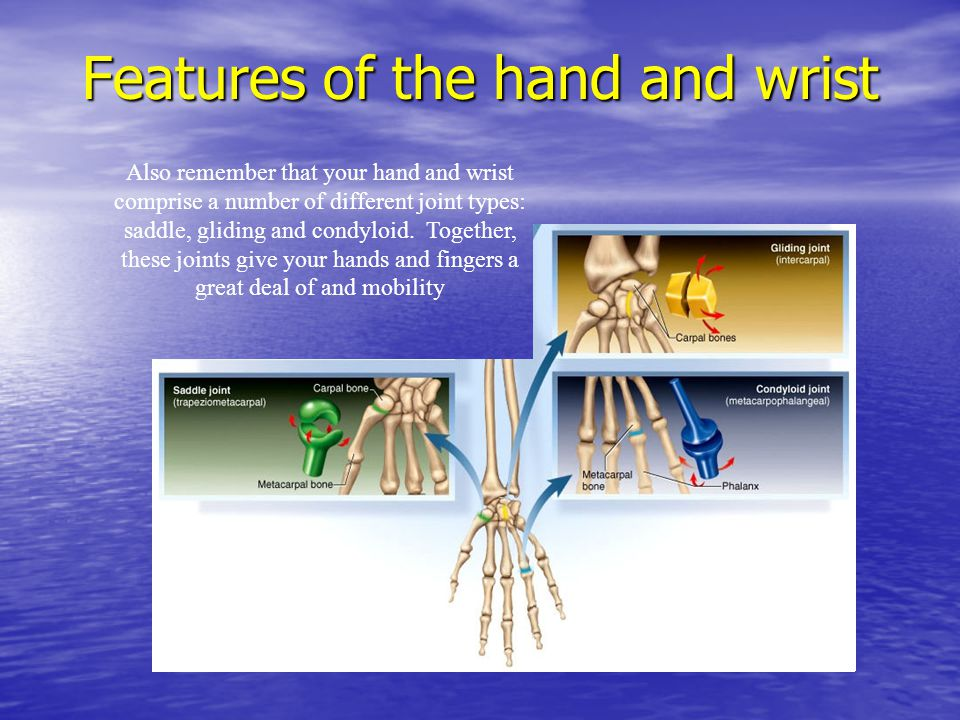 Features of the hand and wrist