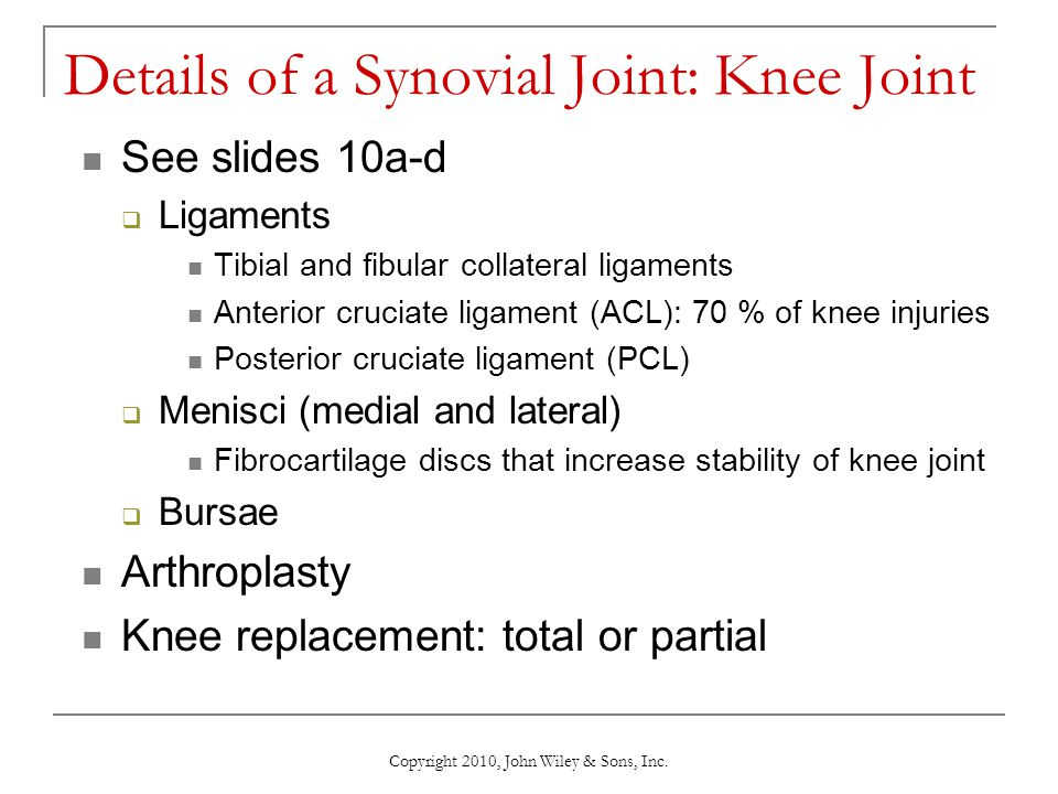 Details of a Synovial Joint: Knee Joint