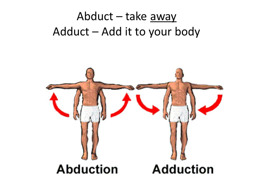 Abduct – take away Adduct – Add it to your body