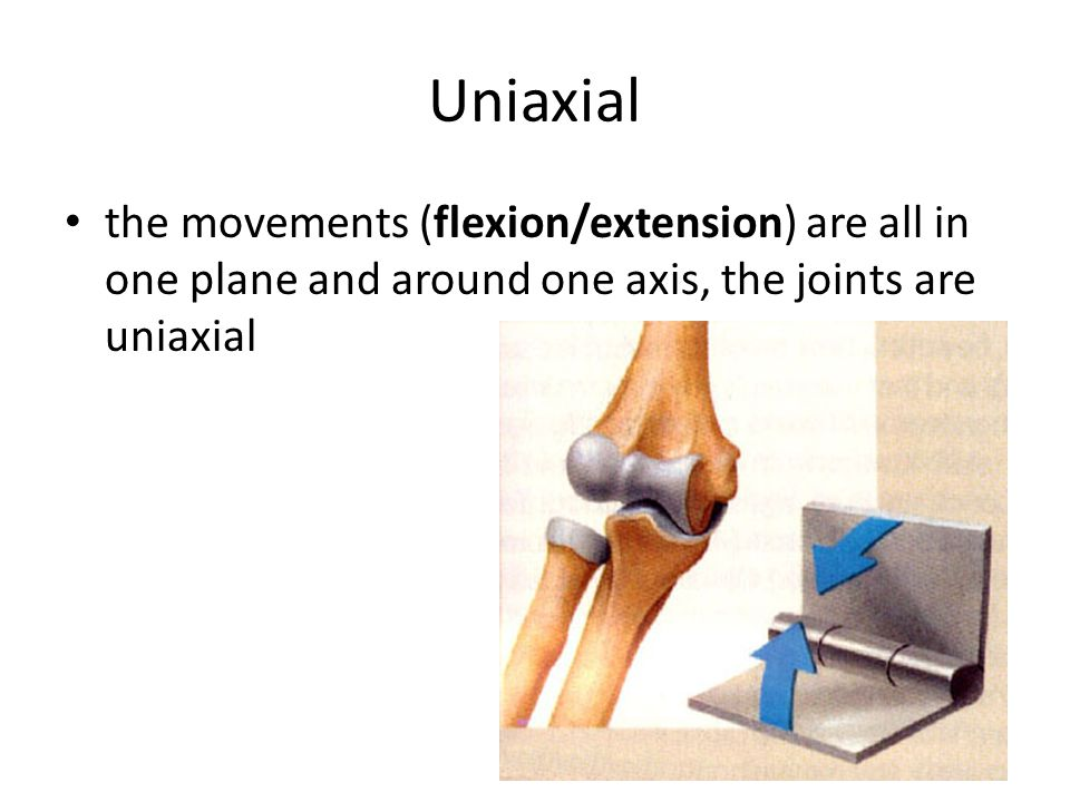 Uniaxial the movements (flexion/extension) are all in one plane and around one axis, the joints are uniaxial.