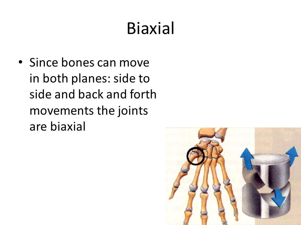 Biaxial Since bones can move in both planes: side to side and back and forth movements the joints are biaxial.