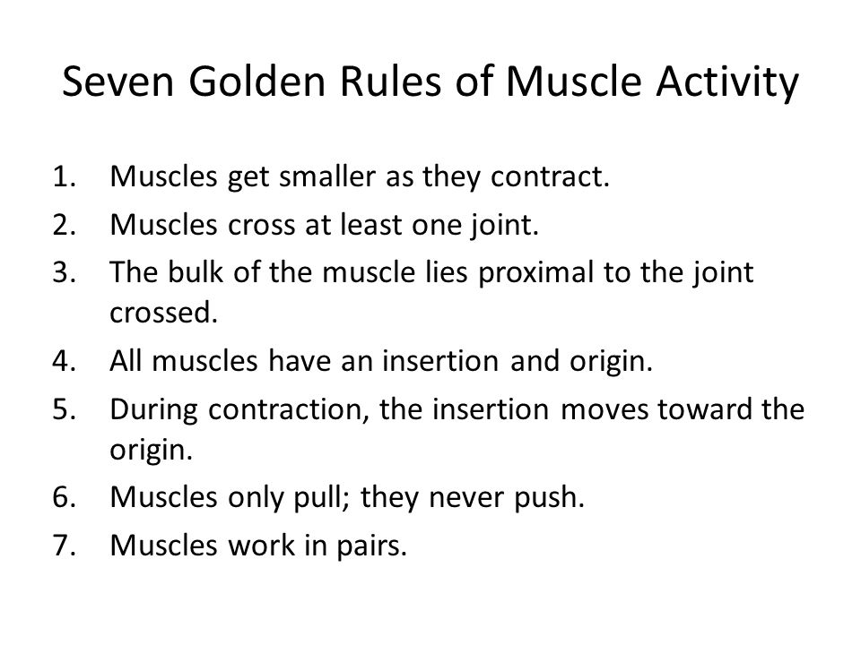 Seven Golden Rules of Muscle Activity