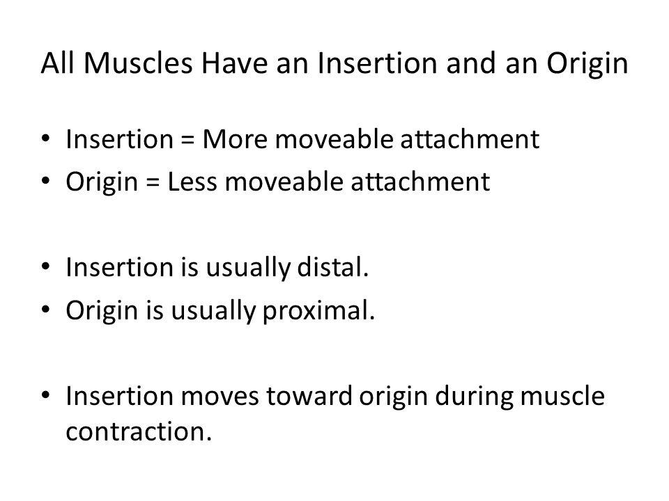 All Muscles Have an Insertion and an Origin