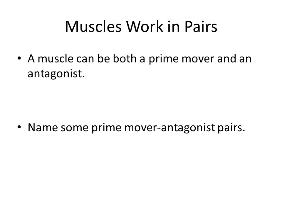 Muscles Work in Pairs A muscle can be both a prime mover and an antagonist.