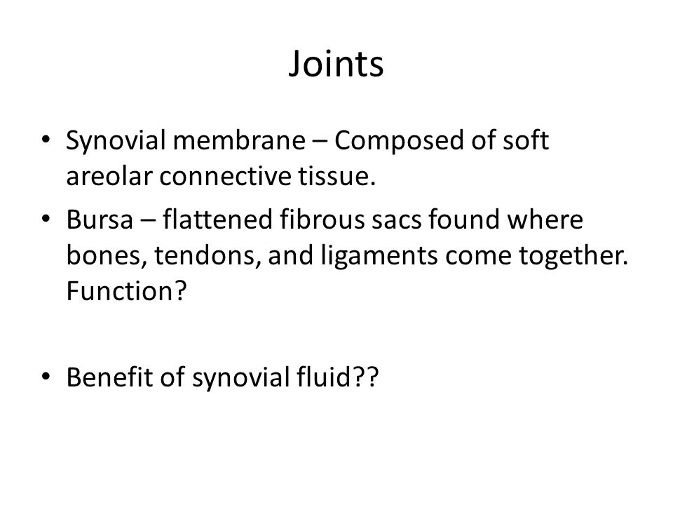 Joints Synovial membrane – Composed of soft areolar connective tissue.