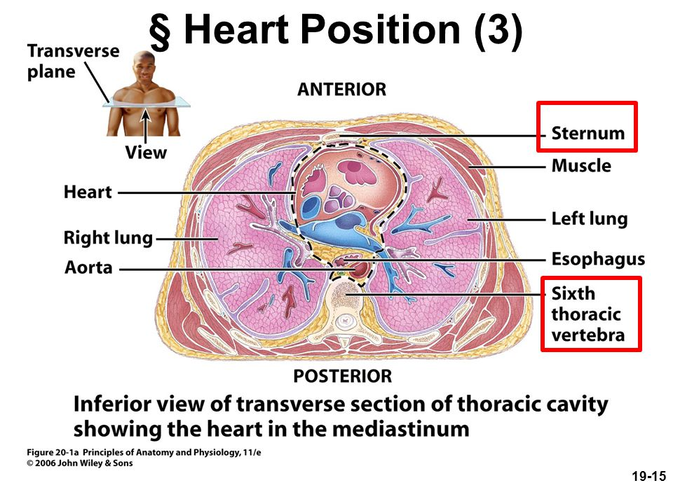 § Heart Position (3)