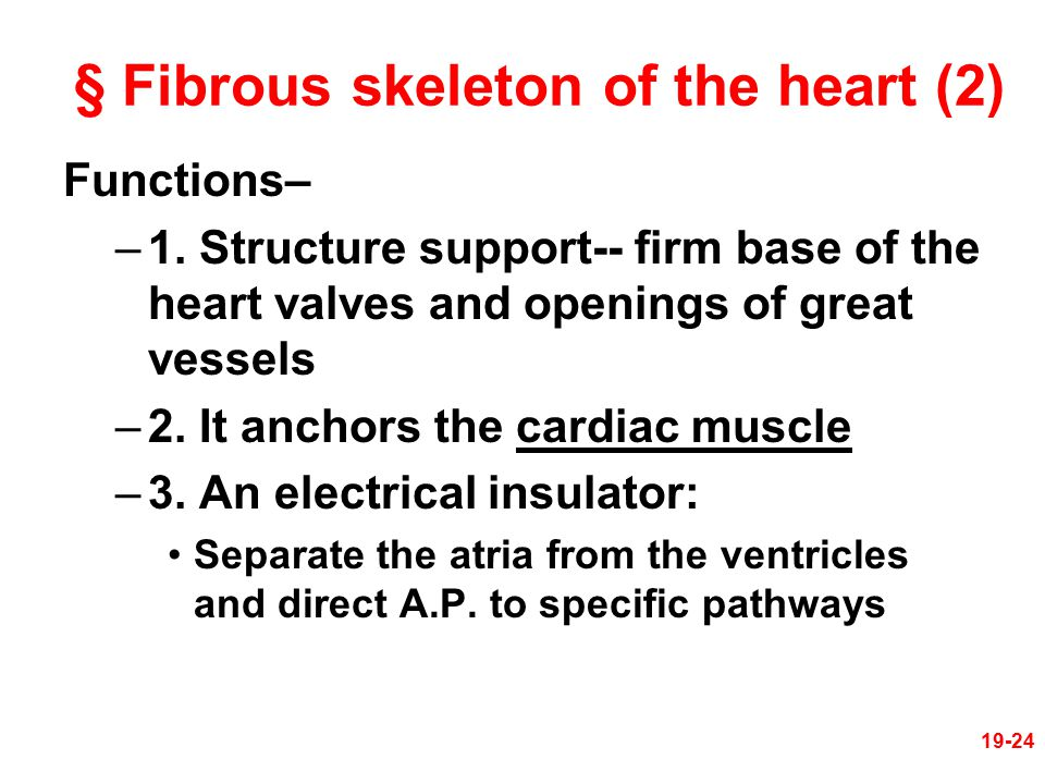 § Fibrous skeleton of the heart (2)