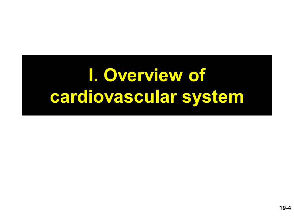 overview of the cardiovascular system essay An overview of the circulatory system in the human body page 1 similar essays: circulatory system, cardiovascular system, coronary artery disease.