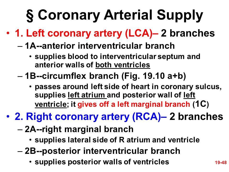 § Coronary Arterial Supply