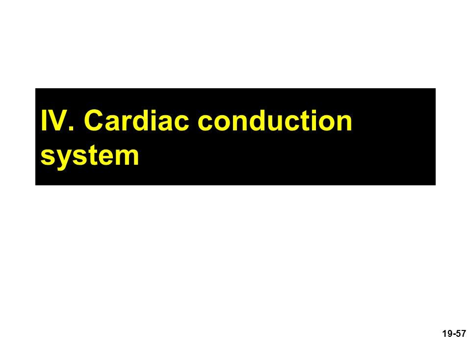 IV. Cardiac conduction system