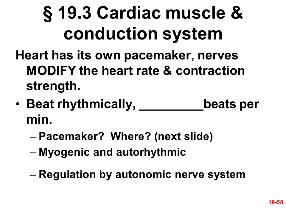 § 19.3 Cardiac muscle & conduction system