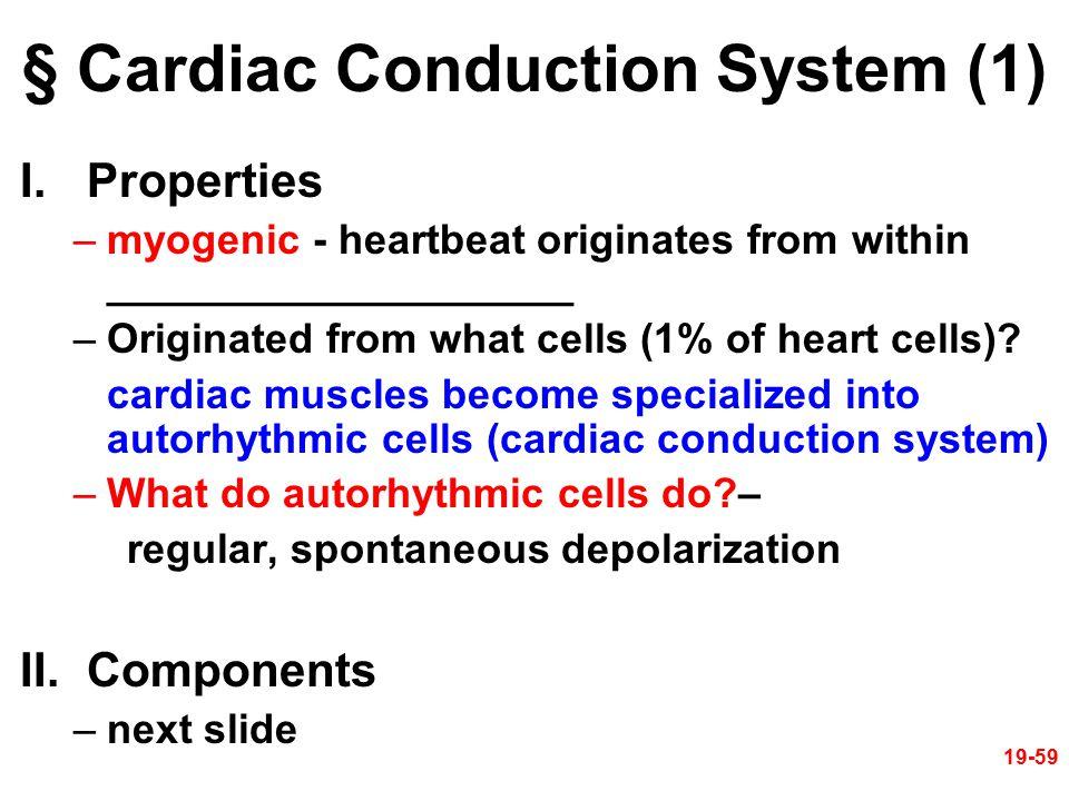 § Cardiac Conduction System (1)
