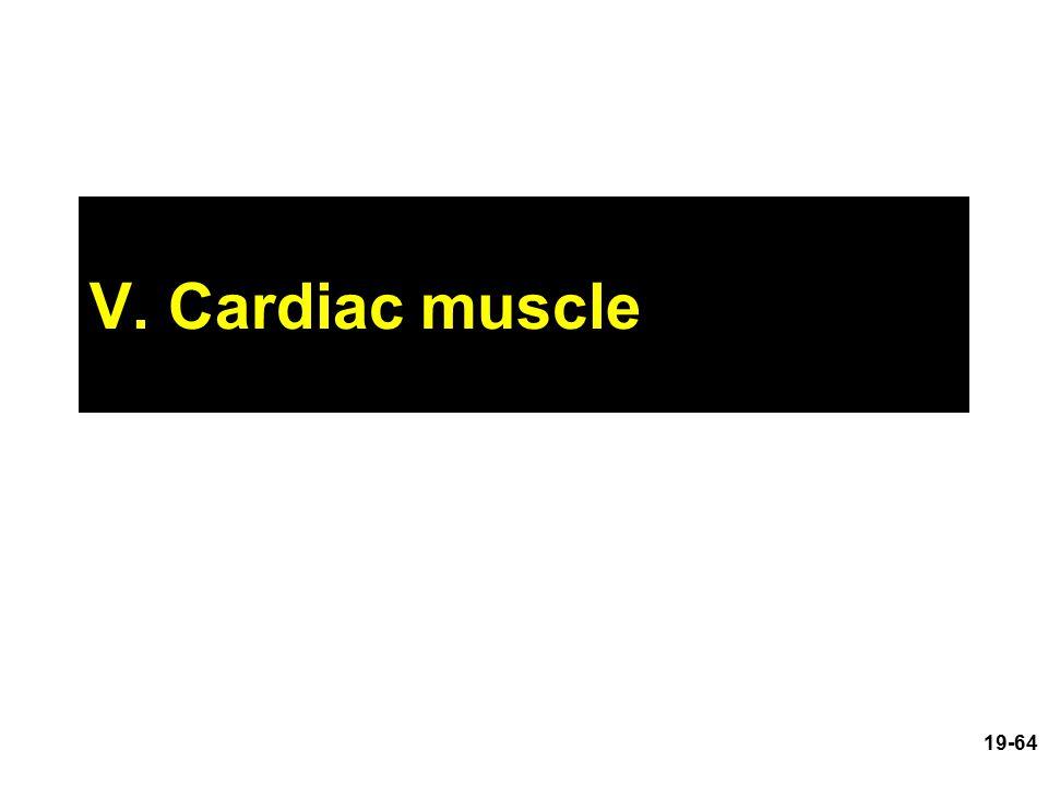 V. Cardiac muscle