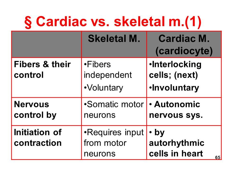 § Cardiac vs. skeletal m.(1)