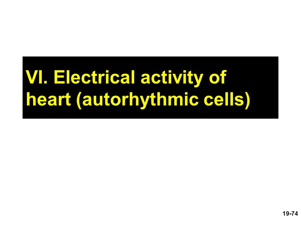 VI. Electrical activity of heart (autorhythmic cells)