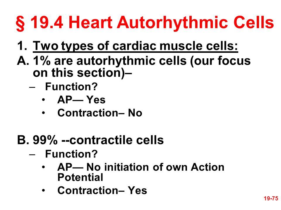 § 19.4 Heart Autorhythmic Cells