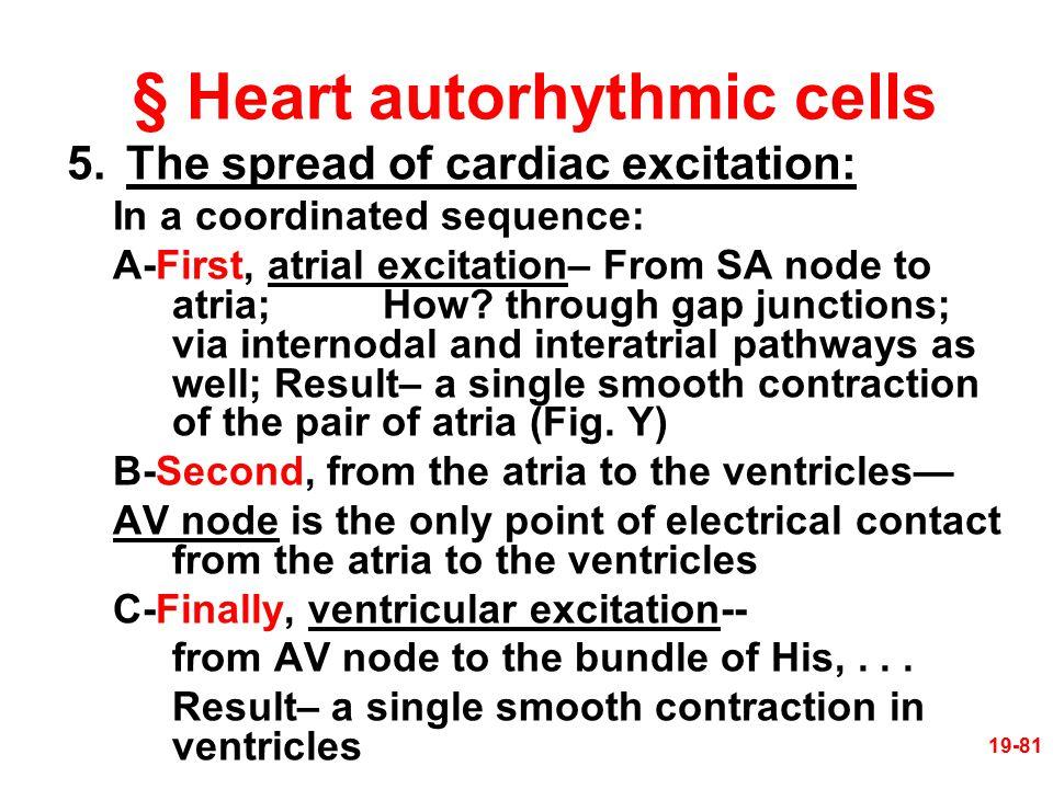 § Heart autorhythmic cells