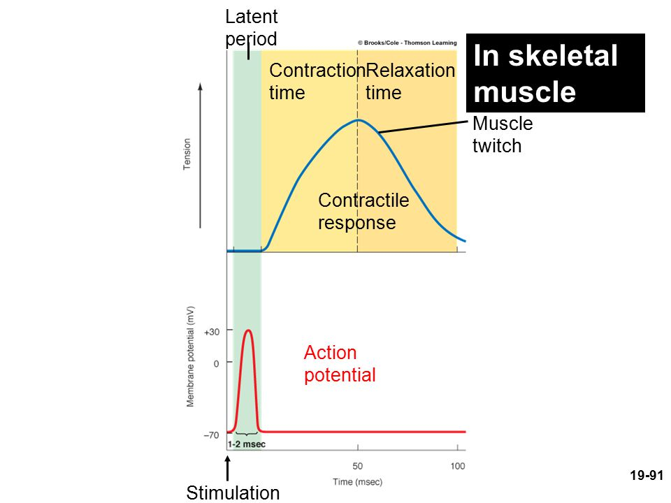 In skeletal muscle Latent period Contraction time Relaxation time