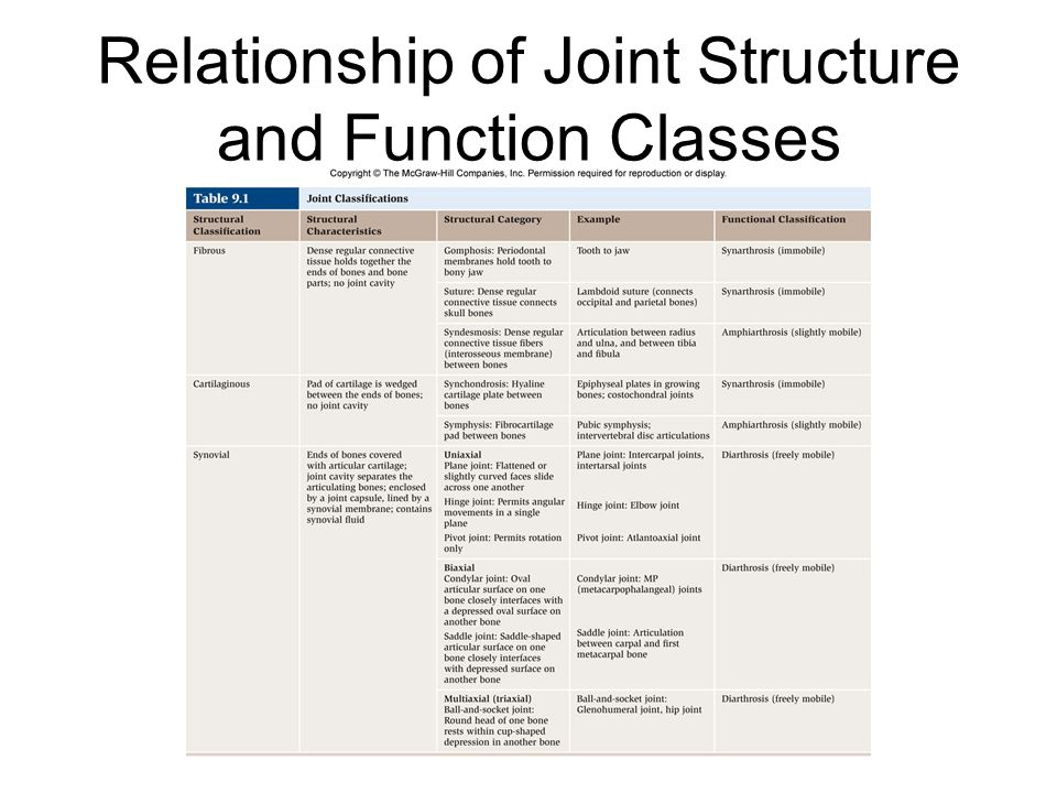 Relationship of Joint Structure and Function Classes