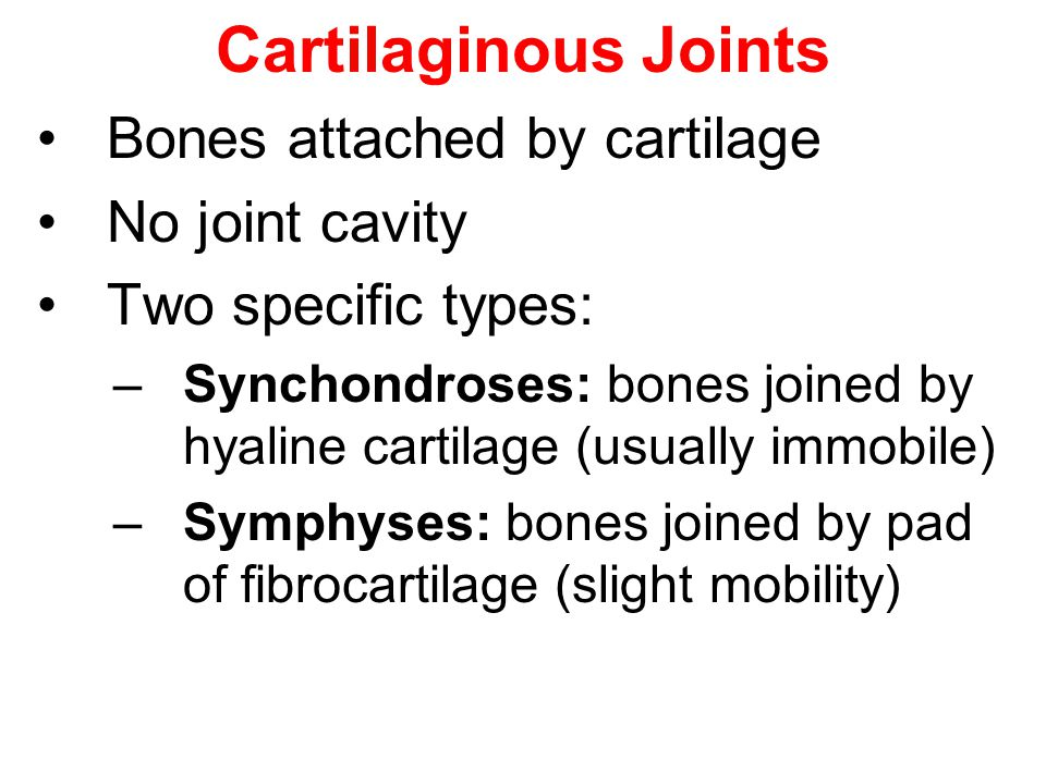 Cartilaginous Joints Bones attached by cartilage No joint cavity