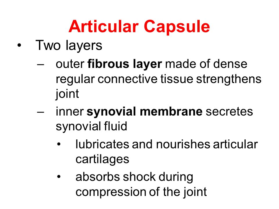 Articular Capsule Two layers
