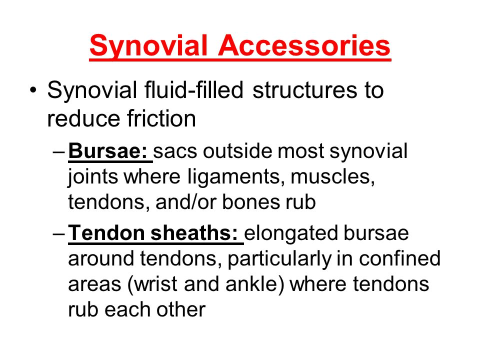 Synovial Accessories Synovial fluid-filled structures to reduce friction.